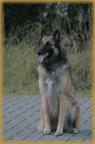 Dixi im September 2005